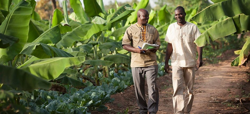Two African men walking on a farm trail.